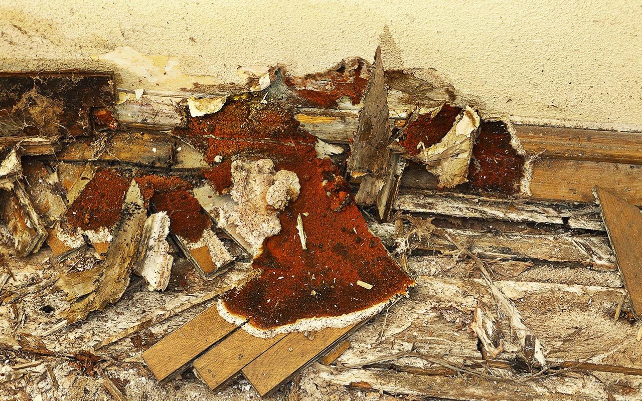 traitement du bois merule champignon INS Bretagne